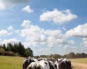 LES MOTS DE LA TERRE <br/> Paroles d'agriculteurs en pays de Pontivy